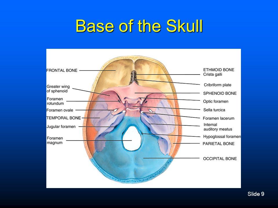 Slide 9 Base of the Skull