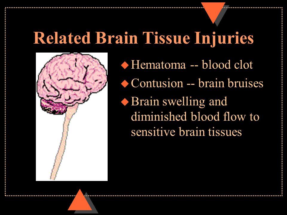 Related Brain Tissue Injuries u Hematoma -- blood clot u Contusion -- brain bruises u Brain swelling and diminished blood flow to sensitive brain tissues