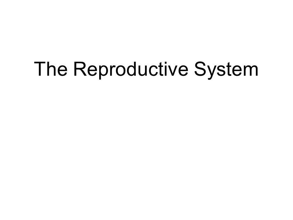 (a) Zygote (fertilized egg) (b) 4-cell stage 2 days (c) Morula 3 days (e) Implanting blastocyst 6 days (d) Early blastocyst 4 days (e) (d) Fertilization (sperm meets egg) Uterine tube Oocyte (egg) (a) Ovulation Ovary (b) (c) Uterus Endometrium Cavity of uterus From Zygote to Blastocyst Degenerating zona pellucida Blastocyst cavity Inner cell mass Blastocyst cavity Trophoblast