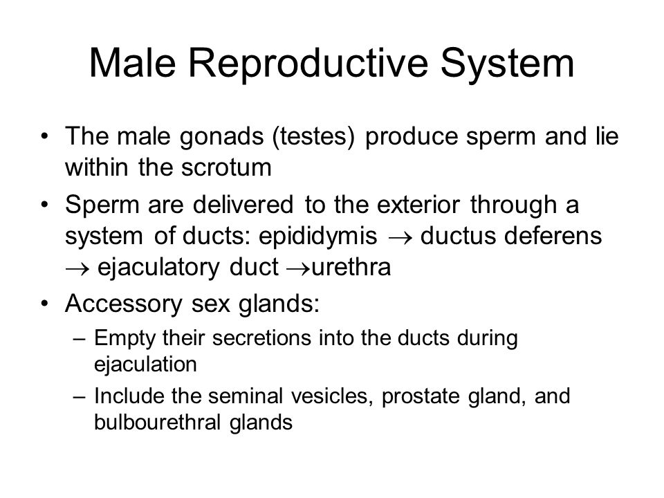 Hormonal Regulation of Testicular Function The hypothalamus releases gonadotropin-releasing hormone (GnRH) GnRH stimulates the anterior pituitary to secrete FSH and LH –FSH causes sustentacular cells ( Nurse) to release androgen- binding protein (ABP) and inhibin.