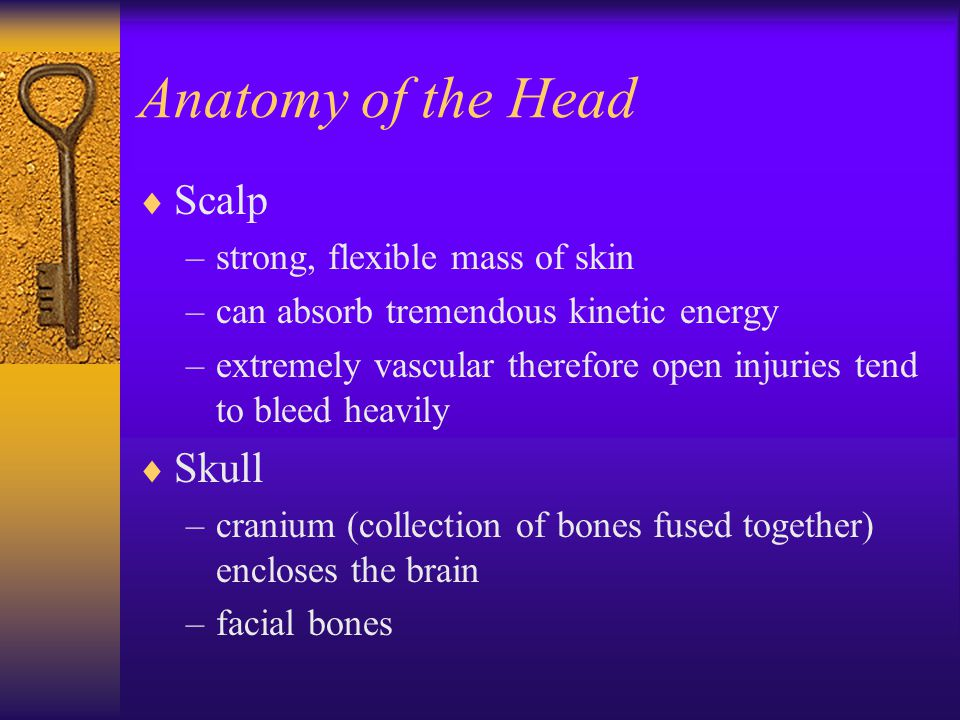 Anatomy of the Head  Scalp –strong, flexible mass of skin –can absorb tremendous kinetic energy –extremely vascular therefore open injuries tend to b
