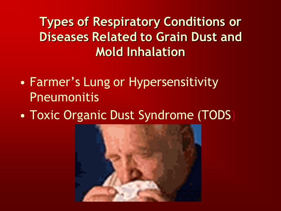 So Why Should You Be Concerned About Inhaling Grain Dust and Mold? Destruction of different components of the Respiratory System occur when these subs