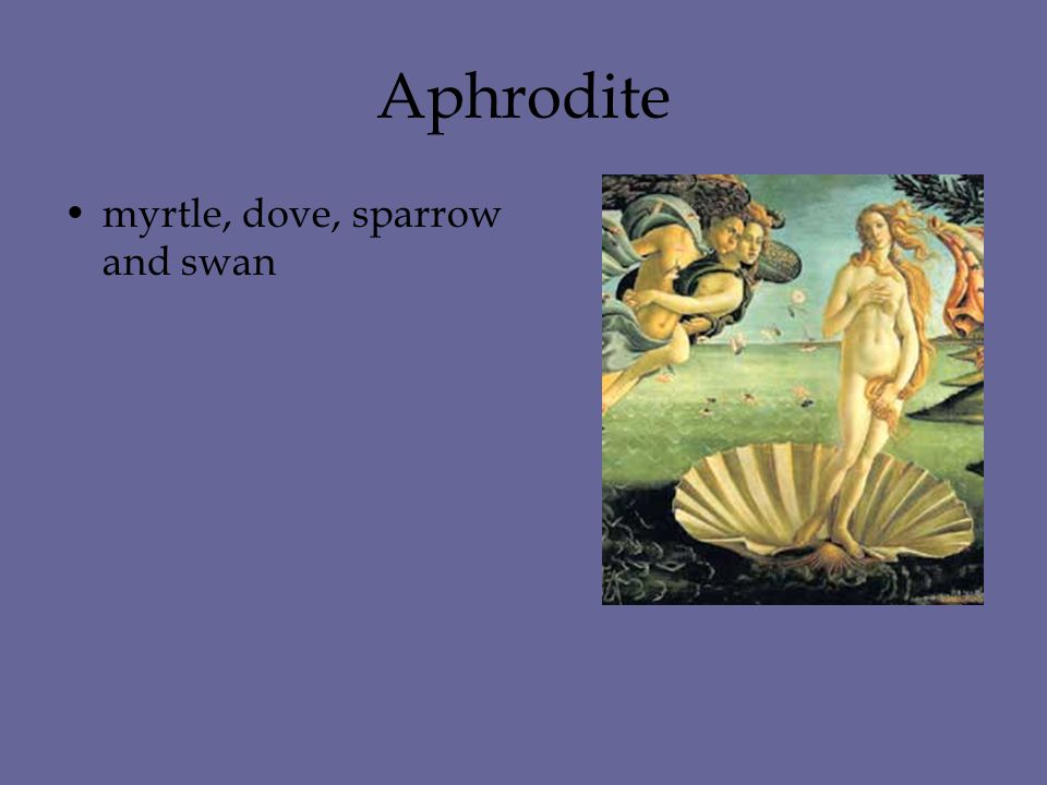 Aphrodite myrtle, dove, sparrow and swan