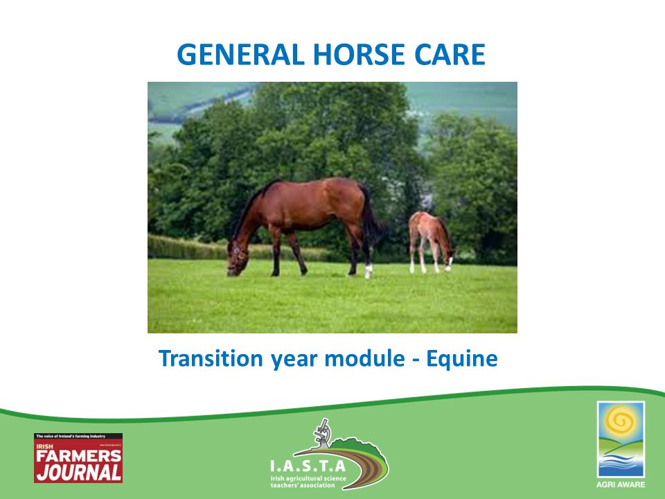 GENERAL HORSE CARE Transition year module - Equine