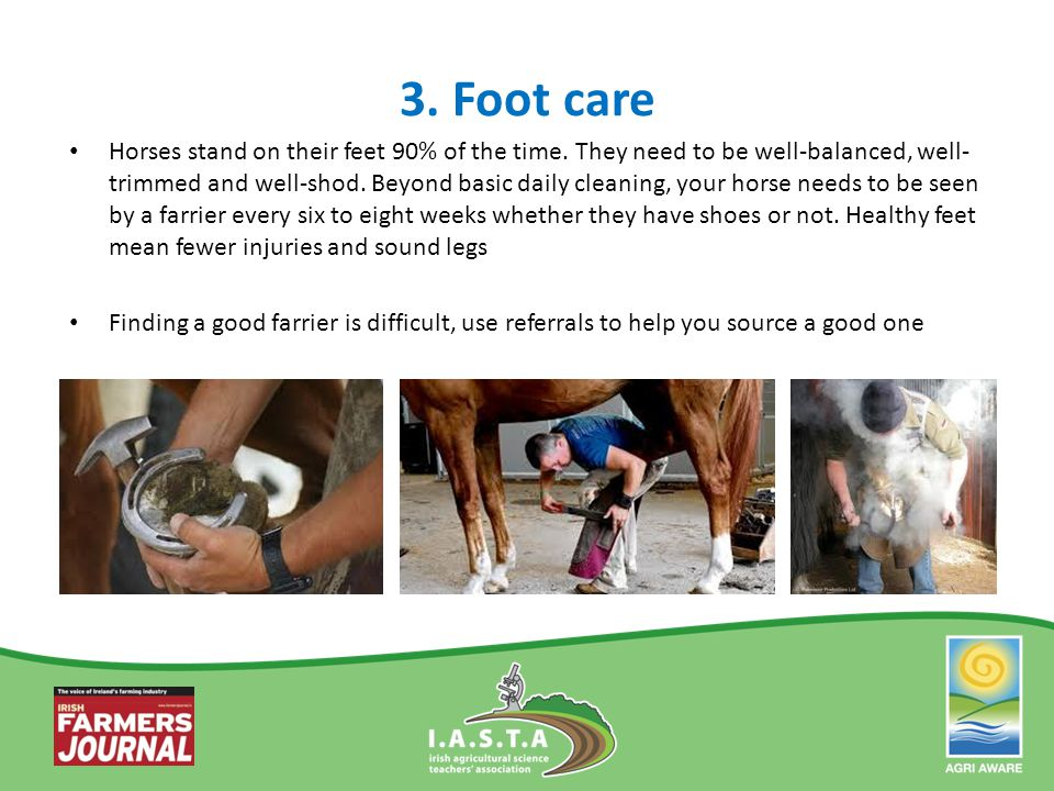 3. Foot care Horses stand on their feet 90% of the time. They need to be well-balanced, well- trimmed and well-shod. Beyond basic daily cleaning, your