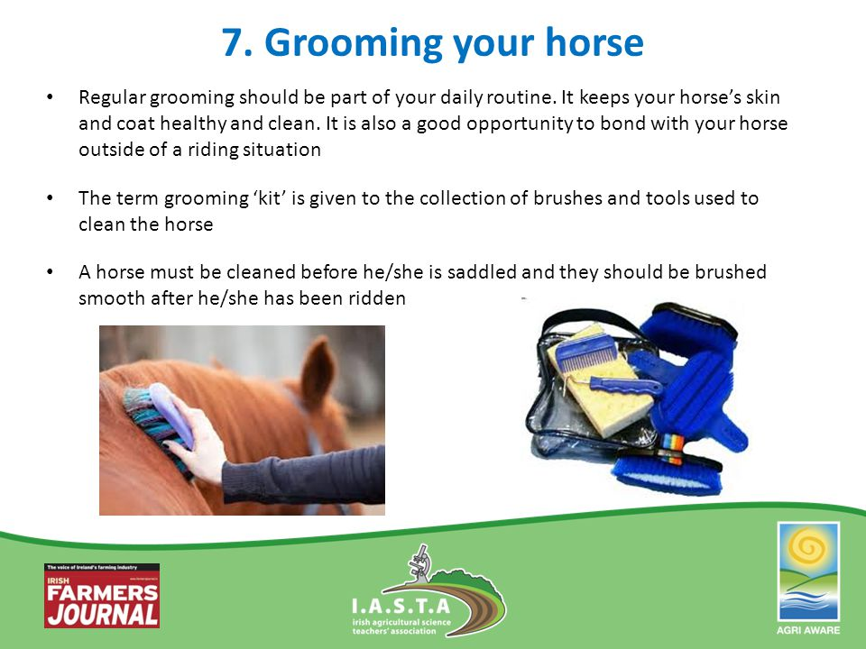 7. Grooming your horse Regular grooming should be part of your daily routine. It keeps your horse's skin and coat healthy and clean. It is also a good
