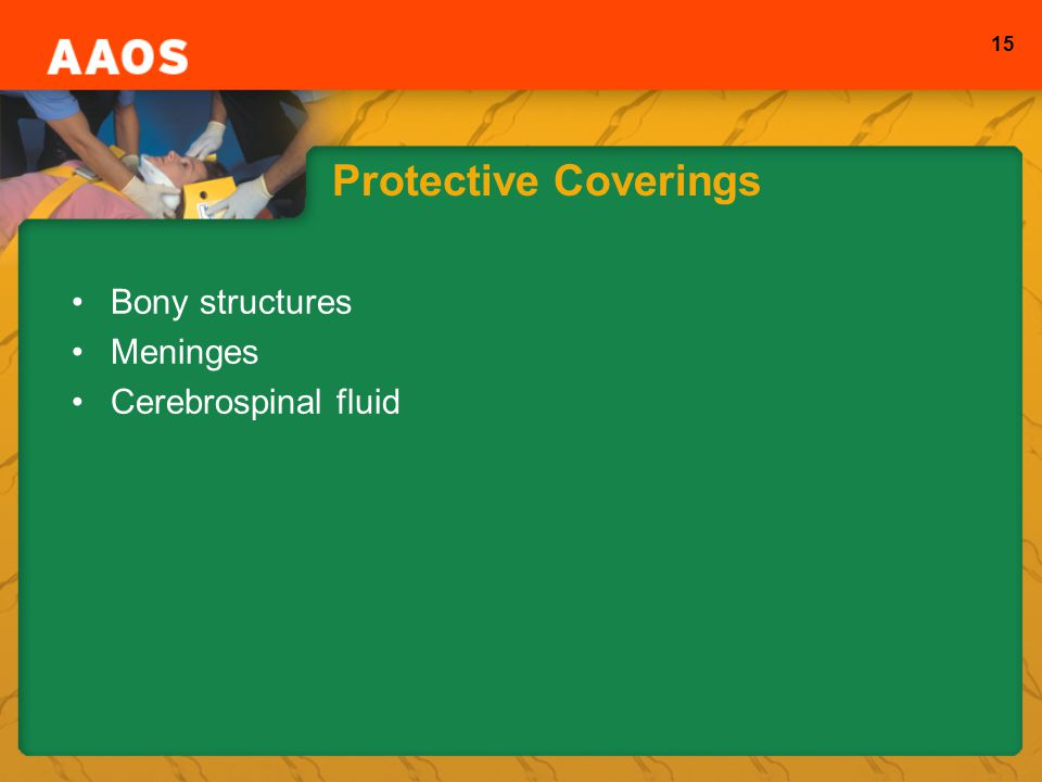 15 Protective Coverings Bony structures Meninges Cerebrospinal fluid