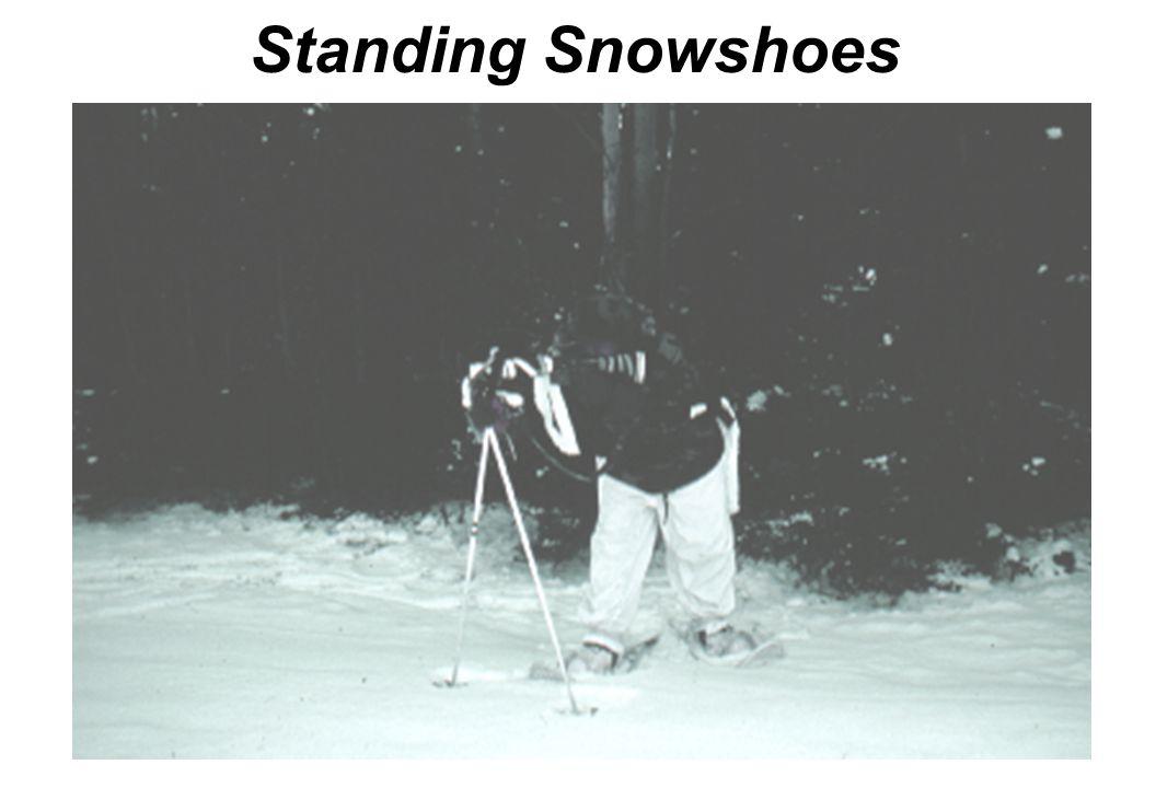 Kneeling on Skis