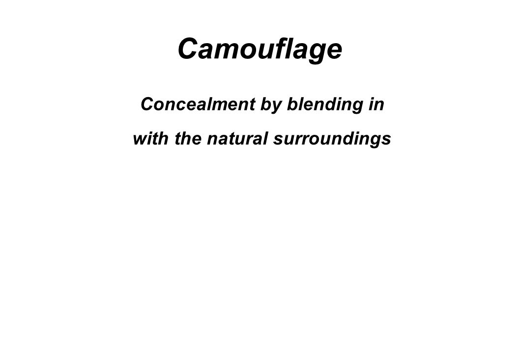 Concealment by blending in with the natural surroundings Camouflage