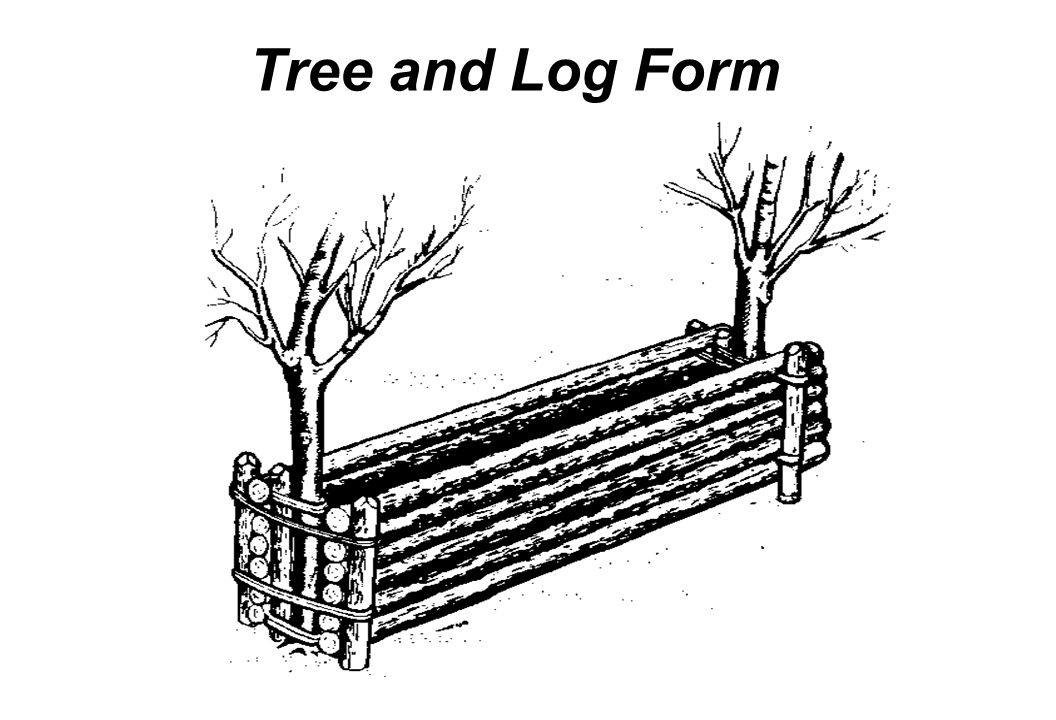 Tree and Log Form