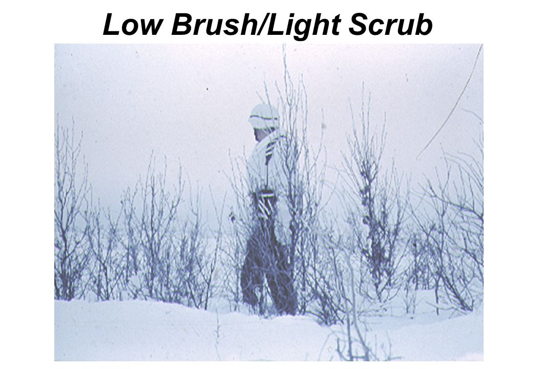 Low Brush/Light Scrub