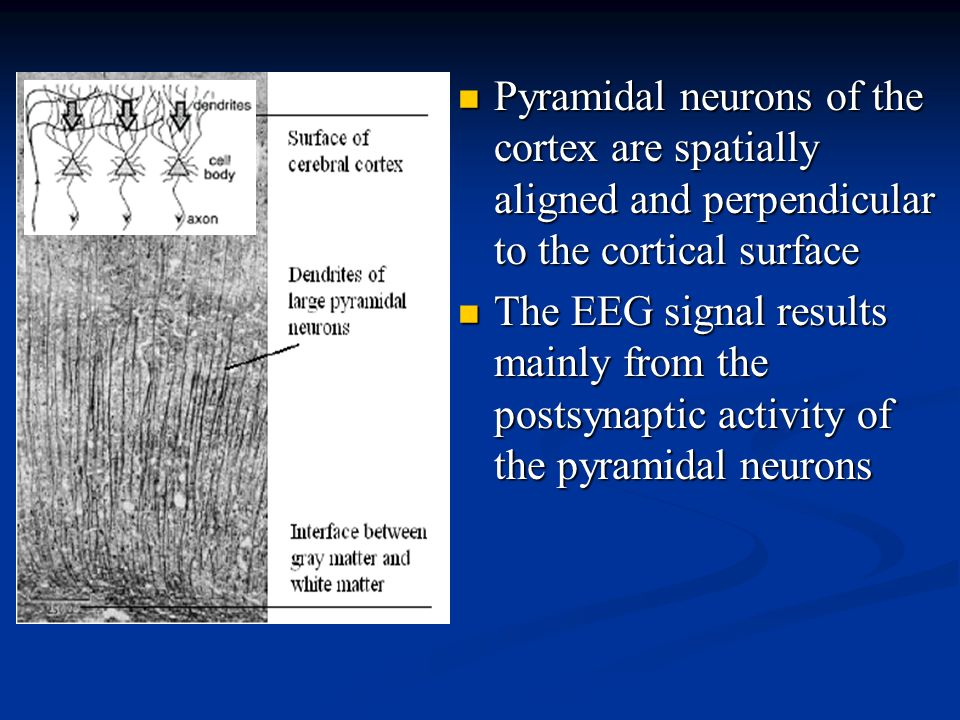 Pyramidal neurons of the cortex are spatially aligned and perpendicular to the cortical surface Pyramidal neurons of the cortex are spatially aligned and perpendicular to the cortical surface The EEG signal results mainly from the postsynaptic activity of the pyramidal neurons The EEG signal results mainly from the postsynaptic activity of the pyramidal neurons