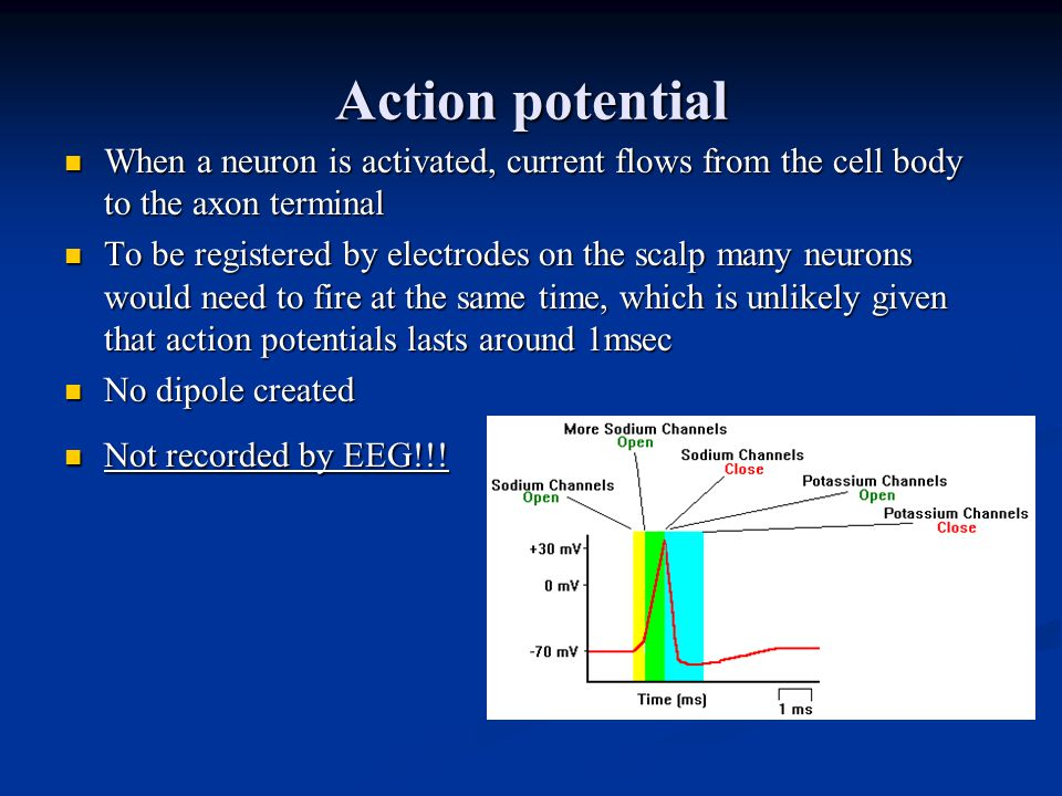 Action potential When a neuron is activated, current flows from the cell body to the axon terminal When a neuron is activated, current flows from the cell body to the axon terminal To be registered by electrodes on the scalp many neurons would need to fire at the same time, which is unlikely given that action potentials lasts around 1msec To be registered by electrodes on the scalp many neurons would need to fire at the same time, which is unlikely given that action potentials lasts around 1msec No dipole created No dipole created Not recorded by EEG!!.