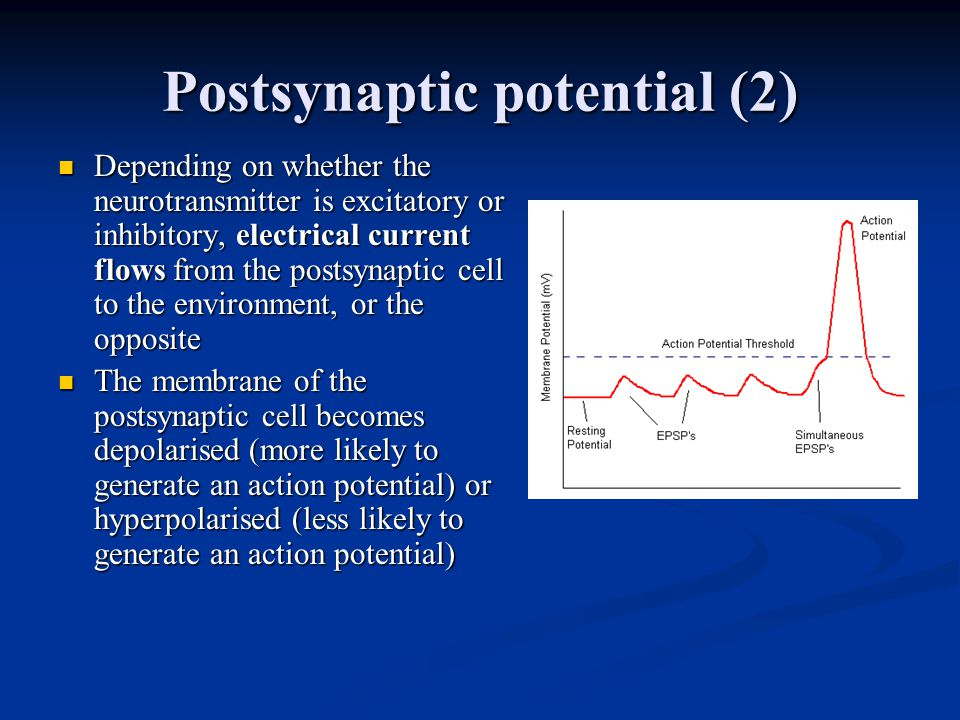 Postsynaptic potential (2) Depending on whether the neurotransmitter is excitatory or inhibitory, electrical current flows from the postsynaptic cell to the environment, or the opposite Depending on whether the neurotransmitter is excitatory or inhibitory, electrical current flows from the postsynaptic cell to the environment, or the opposite The membrane of the postsynaptic cell becomes depolarised (more likely to generate an action potential) or hyperpolarised (less likely to generate an action potential) The membrane of the postsynaptic cell becomes depolarised (more likely to generate an action potential) or hyperpolarised (less likely to generate an action potential)
