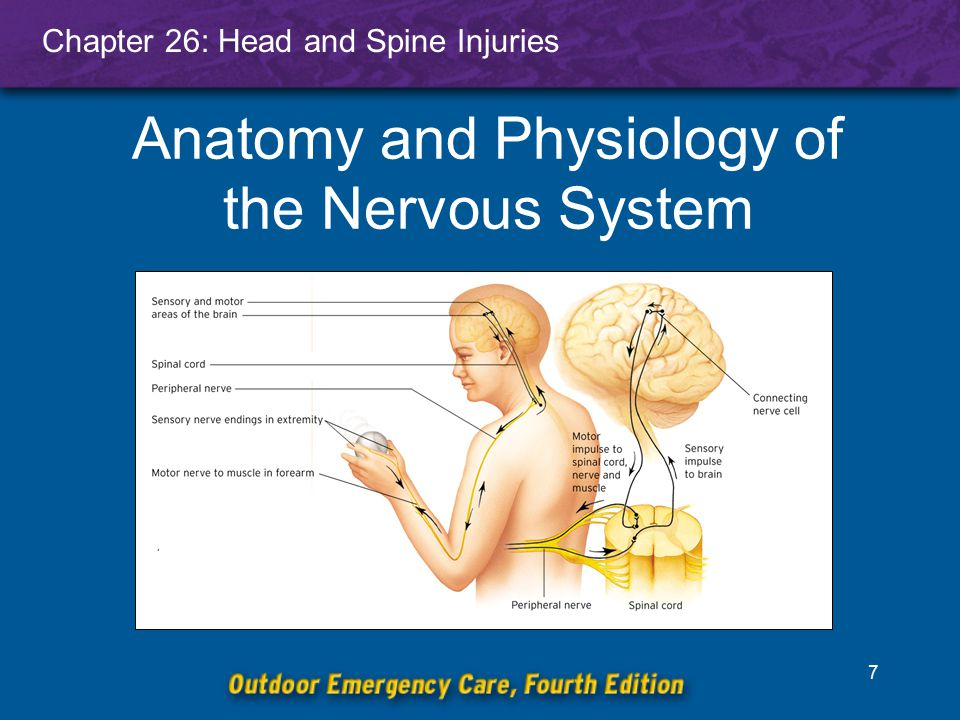Chapter 26: Head and Spine Injuries 8 Central Nervous System