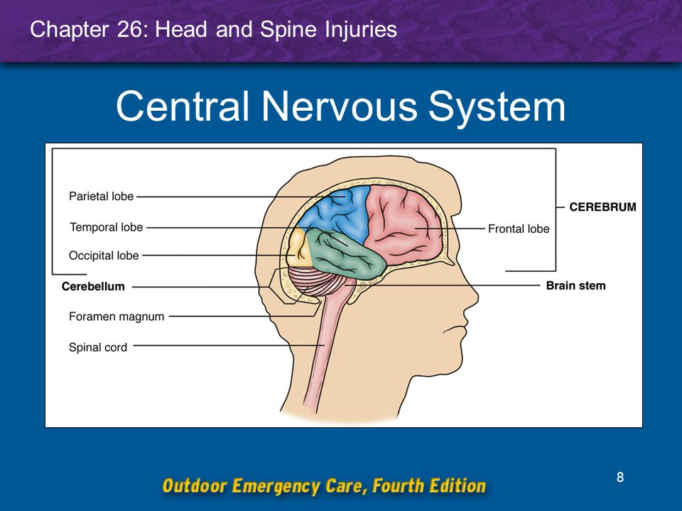 Chapter 26: Head and Spine Injuries 9 Protective Coverings of the Brain