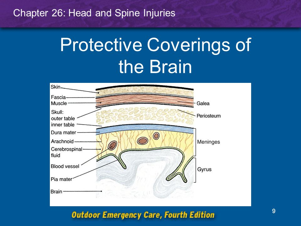 Chapter 26: Head and Spine Injuries 10 Spinal Column