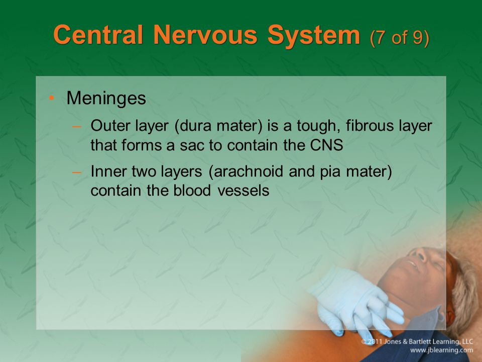 Central Nervous System (7 of 9) Meninges –Outer layer (dura mater) is a tough, fibrous layer that forms a sac to contain the CNS –Inner two layers (ar