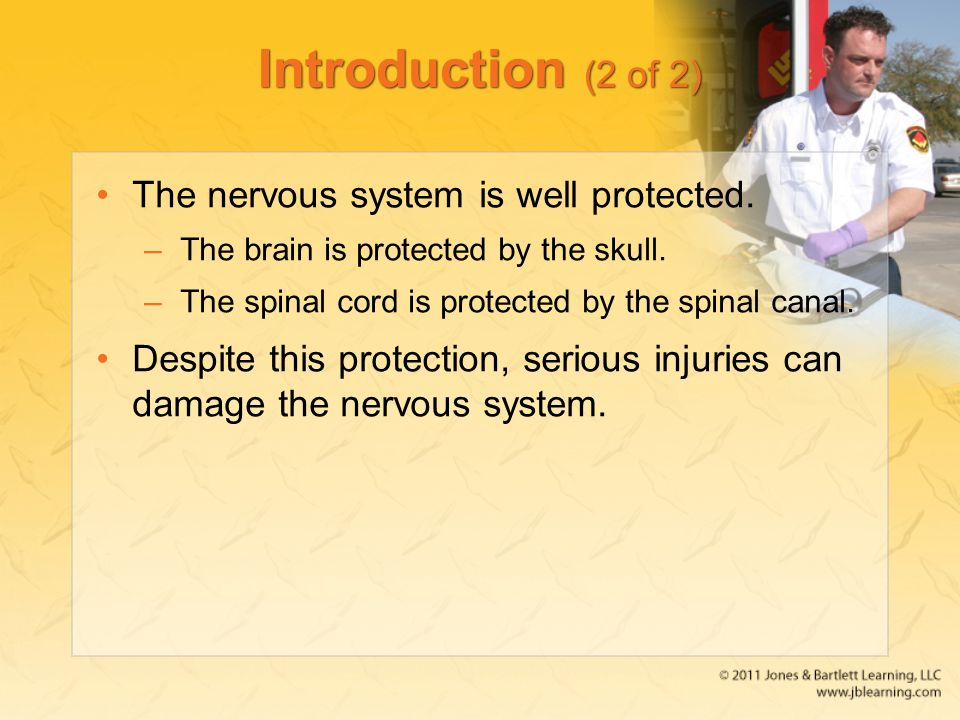 Introduction (2 of 2) The nervous system is well protected. –The brain is protected by the skull. –The spinal cord is protected by the spinal canal. D