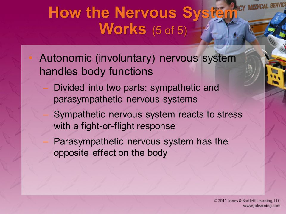 How the Nervous System Works (5 of 5) Autonomic (involuntary) nervous system handles body functions –Divided into two parts: sympathetic and parasympa