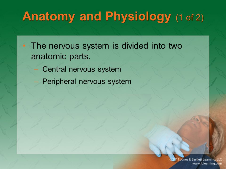 Anatomy and Physiology (1 of 2) The nervous system is divided into two anatomic parts. –Central nervous system –Peripheral nervous system