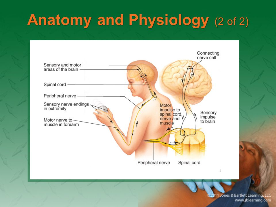 Anatomy and Physiology (2 of 2)