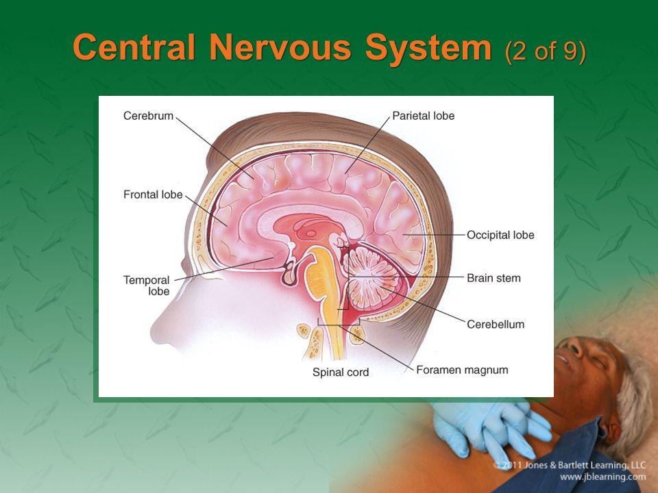 Central Nervous System (2 of 9)