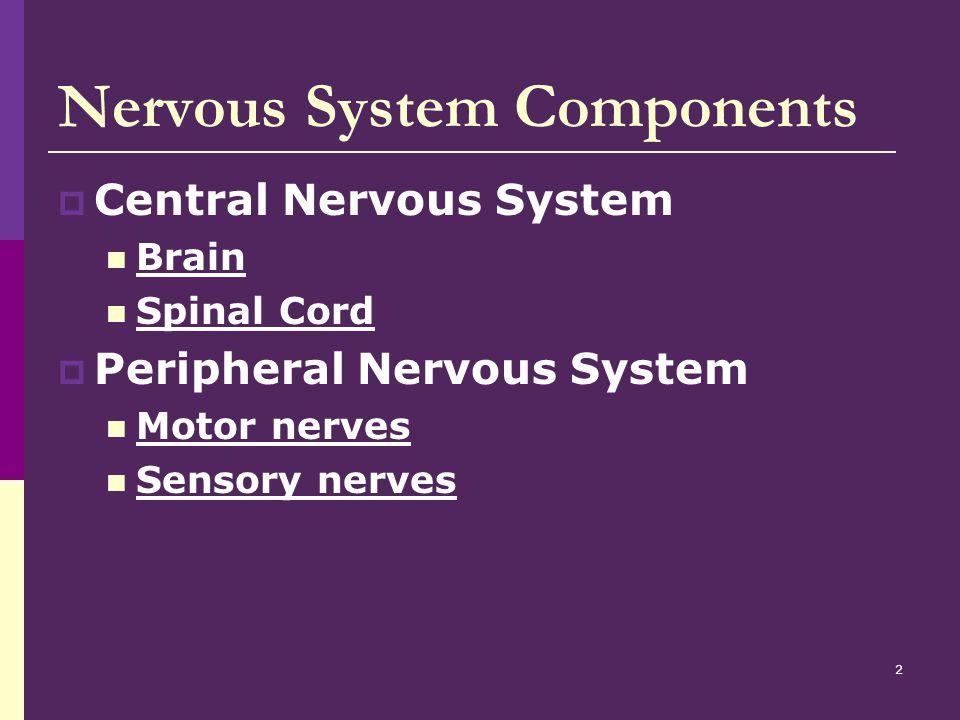 3 Brain  Body's controlling organ  Weighs 3 lbs.