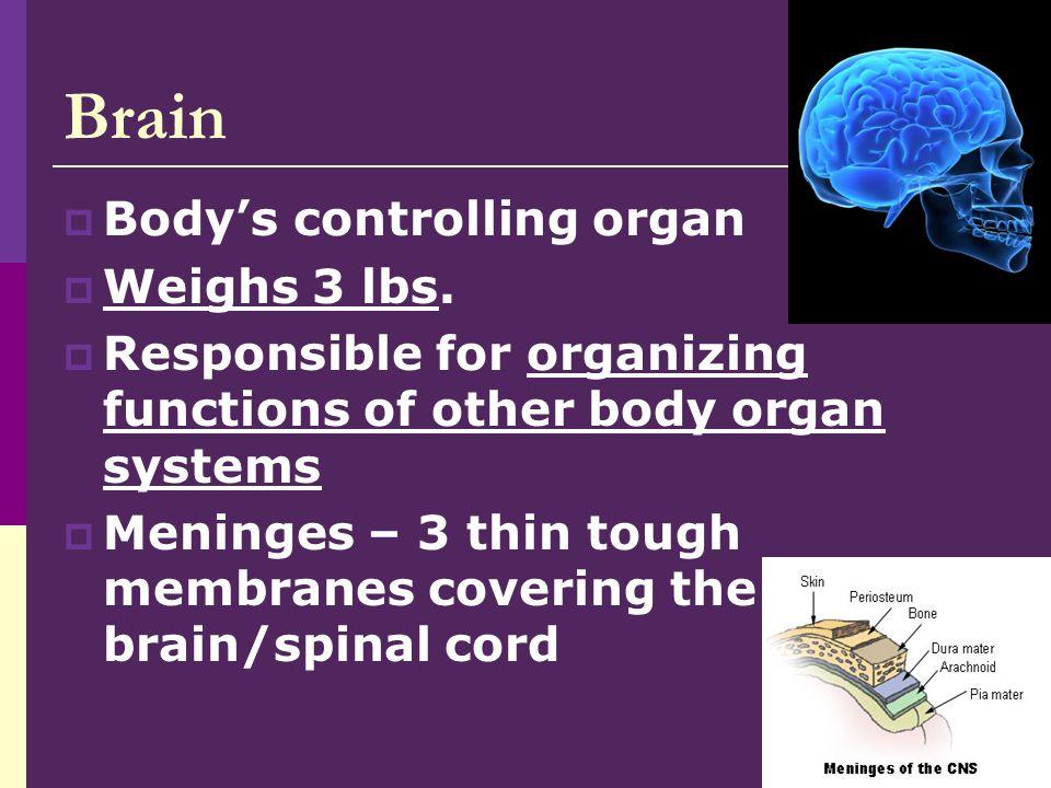 4 Brain  Functions localized to specific areas Cerebrum Cerebellum Brainstem
