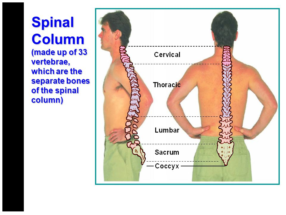 Immobilize the entire spine Movement of the torso effects the stability of the cervical spine.
