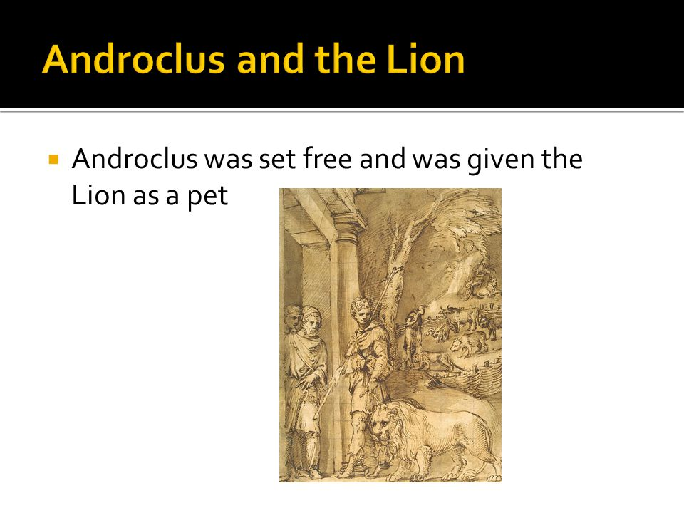  Androclus was set free and was given the Lion as a pet