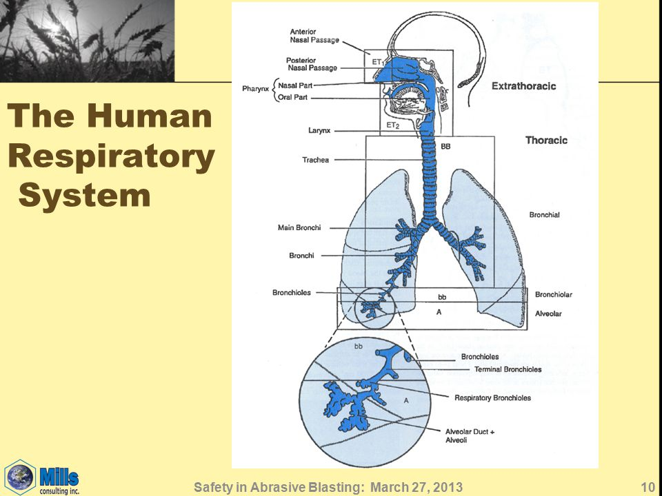 The Human Respiratory System 10Safety in Abrasive Blasting: March 27, 2013