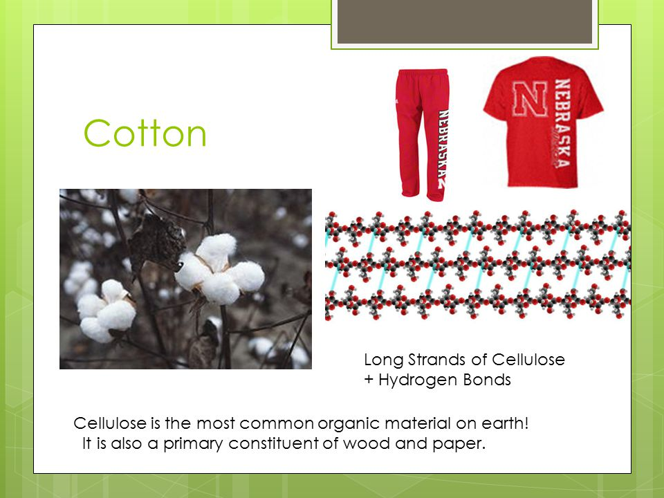 Cotton Long Strands of Cellulose + Hydrogen Bonds Cellulose is the most common organic material on earth! It is also a primary constituent of wood and