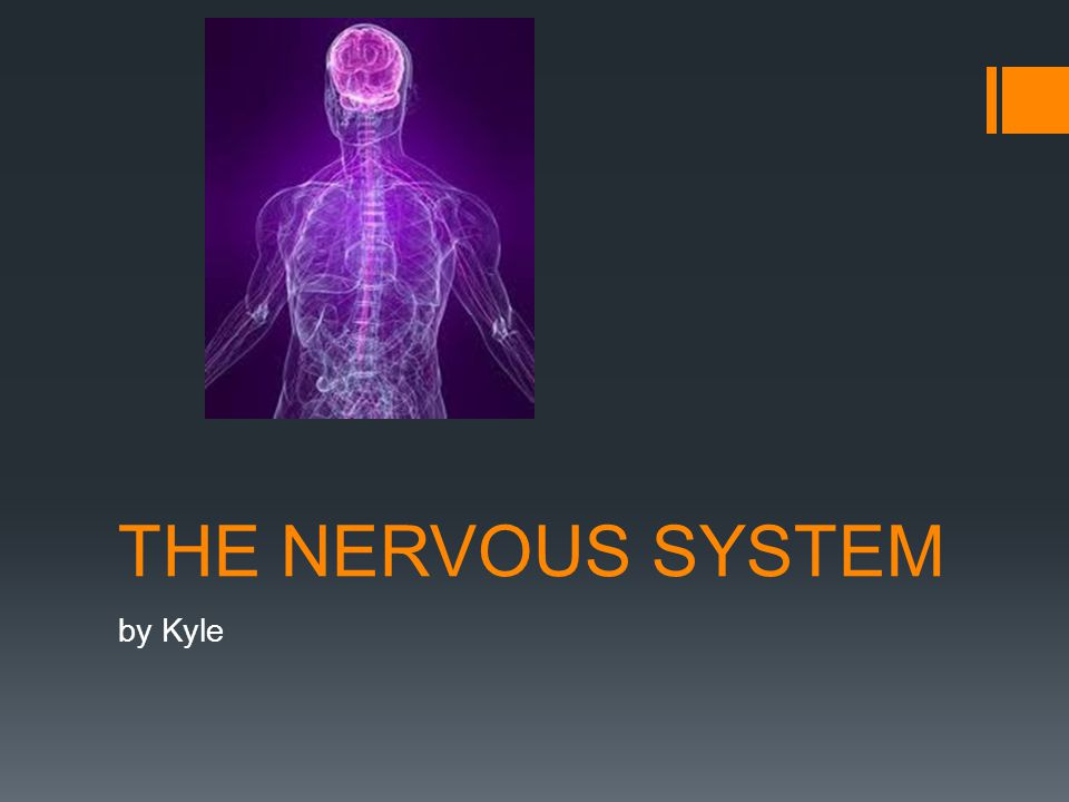 THE NERVOUS SYSTEM by Kyle