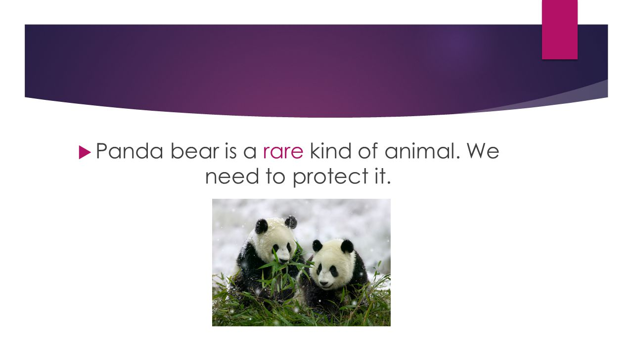  Panda bear is a rare kind of animal. We need to protect it.