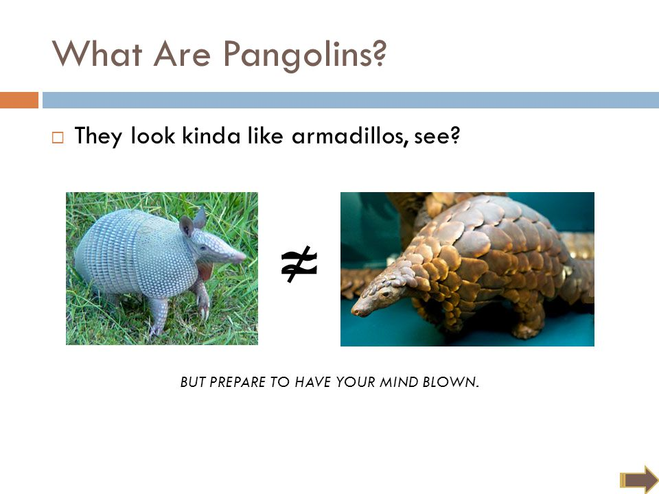 ≈ What Are Pangolins?  They look kinda like armadillos, see? ≠ BUT PREPARE TO HAVE YOUR MIND BLOWN.