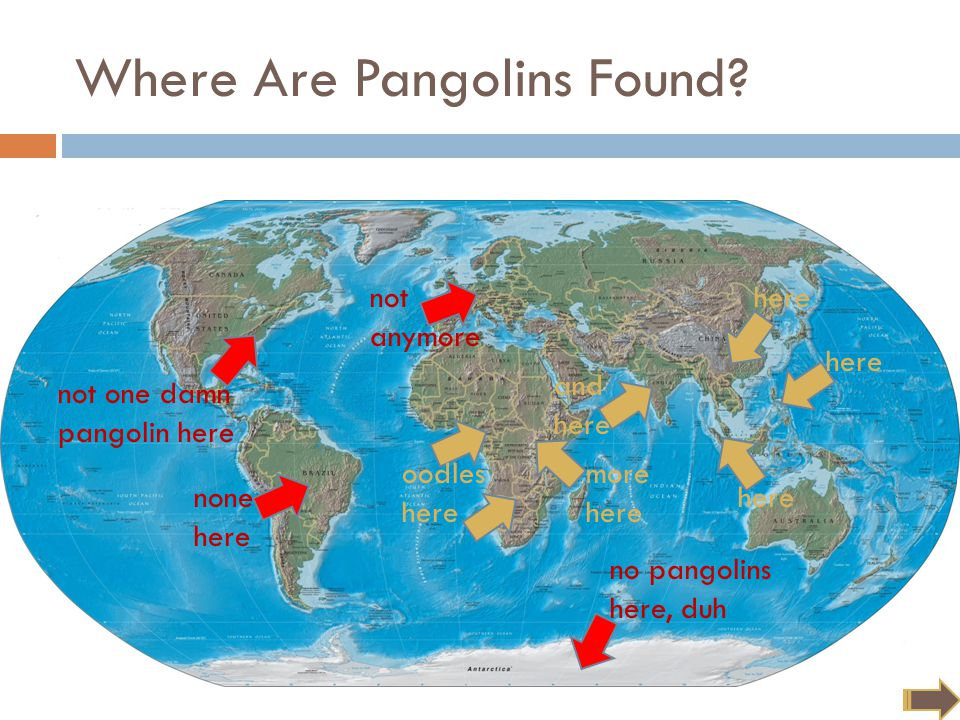 But pangolins are always in our hearts. not anymore Where Are Pangolins Found.