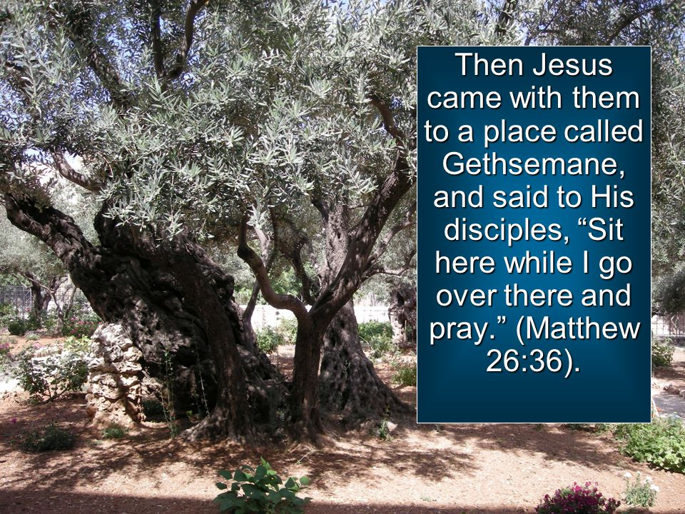 Then Jesus came with them to a place called Gethsemane, and said to His disciples, Sit here while I go over there and pray. (Matthew 26:36).