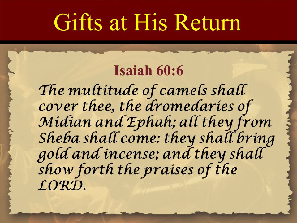 Gifts at His Return The multitude of camels shall cover thee, the dromedaries of Midian and Ephah; all they from Sheba shall come: they shall bring gold and incense; and they shall show forth the praises of the LORD.