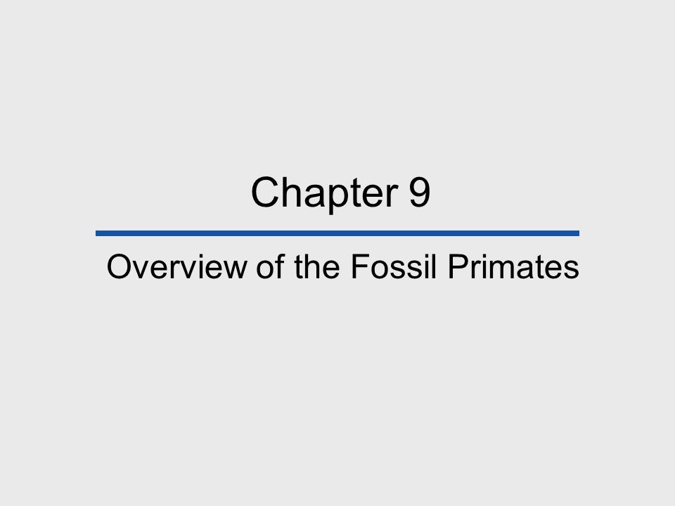 Chapter 9 Overview of the Fossil Primates