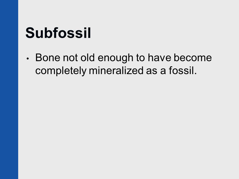 Subfossil Bone not old enough to have become completely mineralized as a fossil.