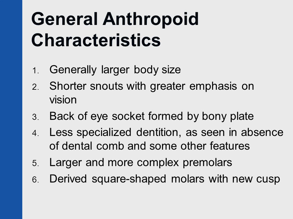 General Anthropoid Characteristics 1. Generally larger body size 2.