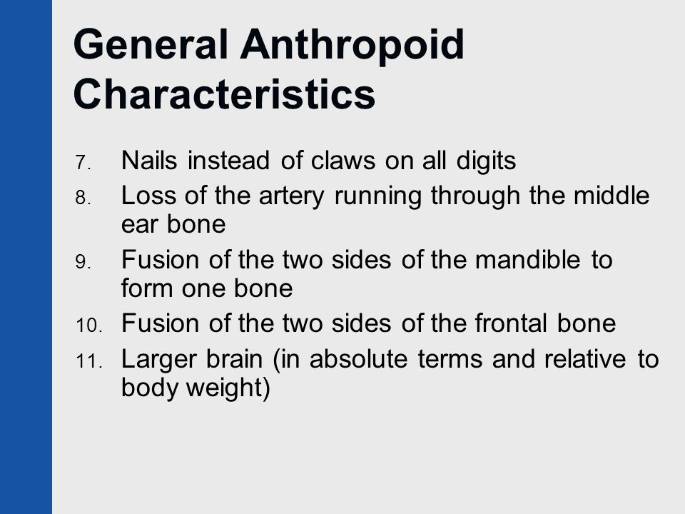 General Anthropoid Characteristics 7. Nails instead of claws on all digits 8.