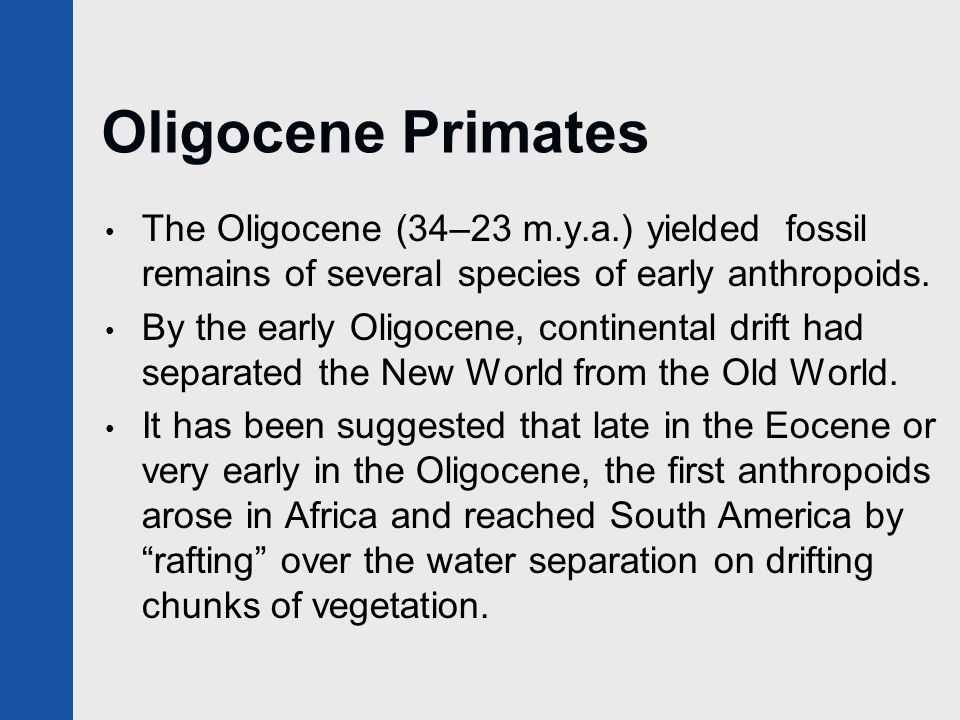 Oligocene Primates The Oligocene (34–23 m.y.a.) yielded fossil remains of several species of early anthropoids.