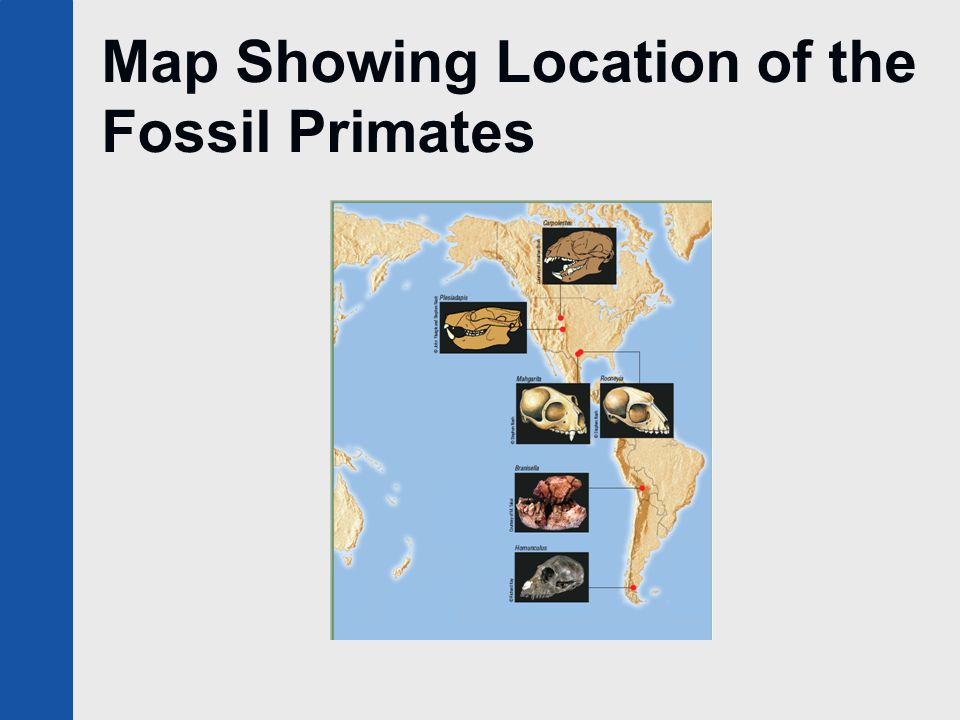 Map Showing Location of the Fossil Primates