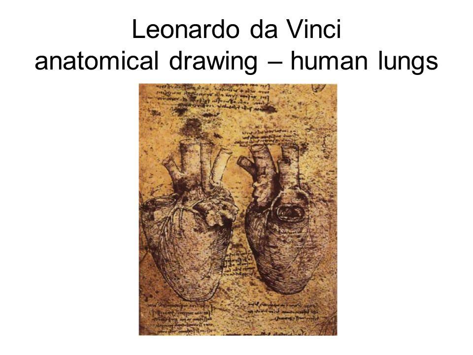 Leonardo da Vinci anatomical drawing – human lungs