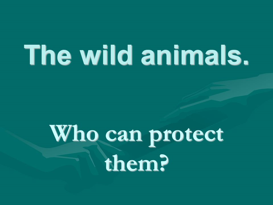The wild animals. Who can protect them