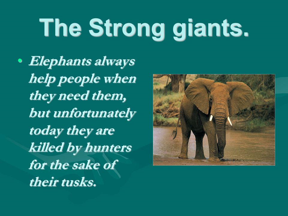 The Strong giants.