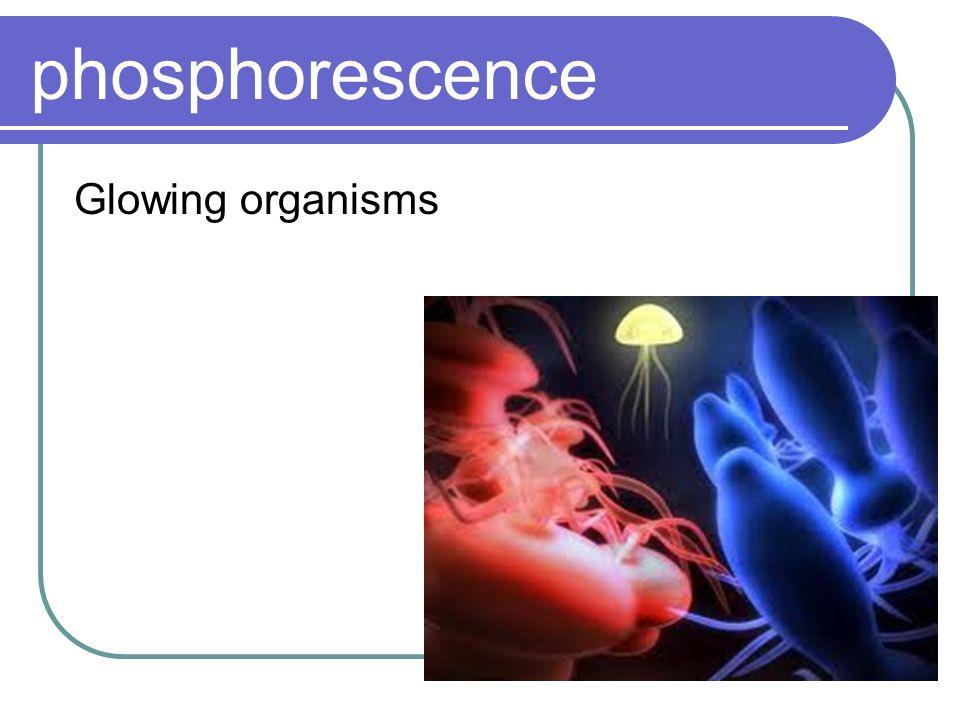 phosphorescence Glowing organisms