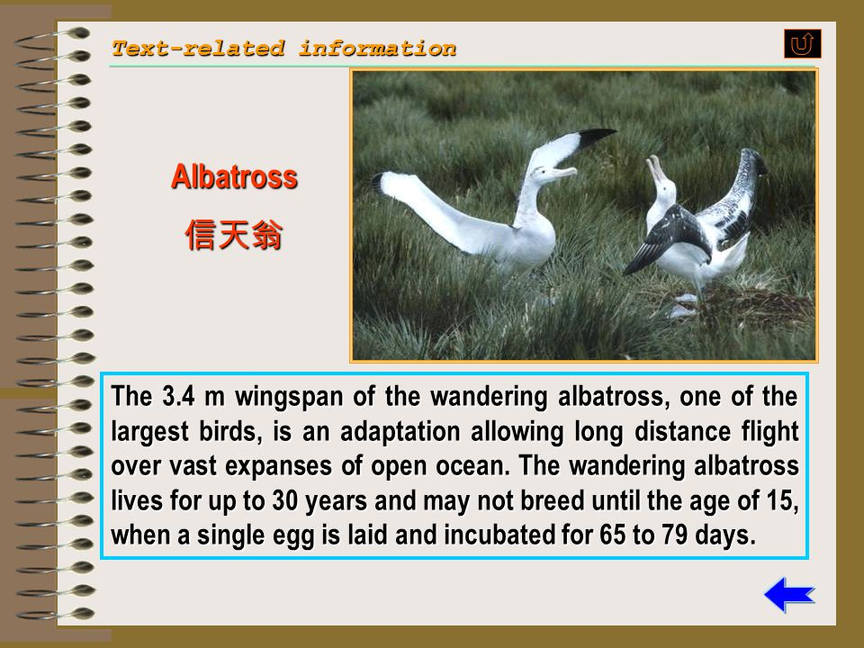 "29 My hand shot up. ""The albatross is a large bird that lives mostly in the ocean regions below the equator, but may be found in the north Pacific as"